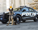 نرم افزار Waze برای پلیس دردسرساز شد