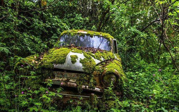 خودروهایی که در طبیعت رها شدند (تصاویر)